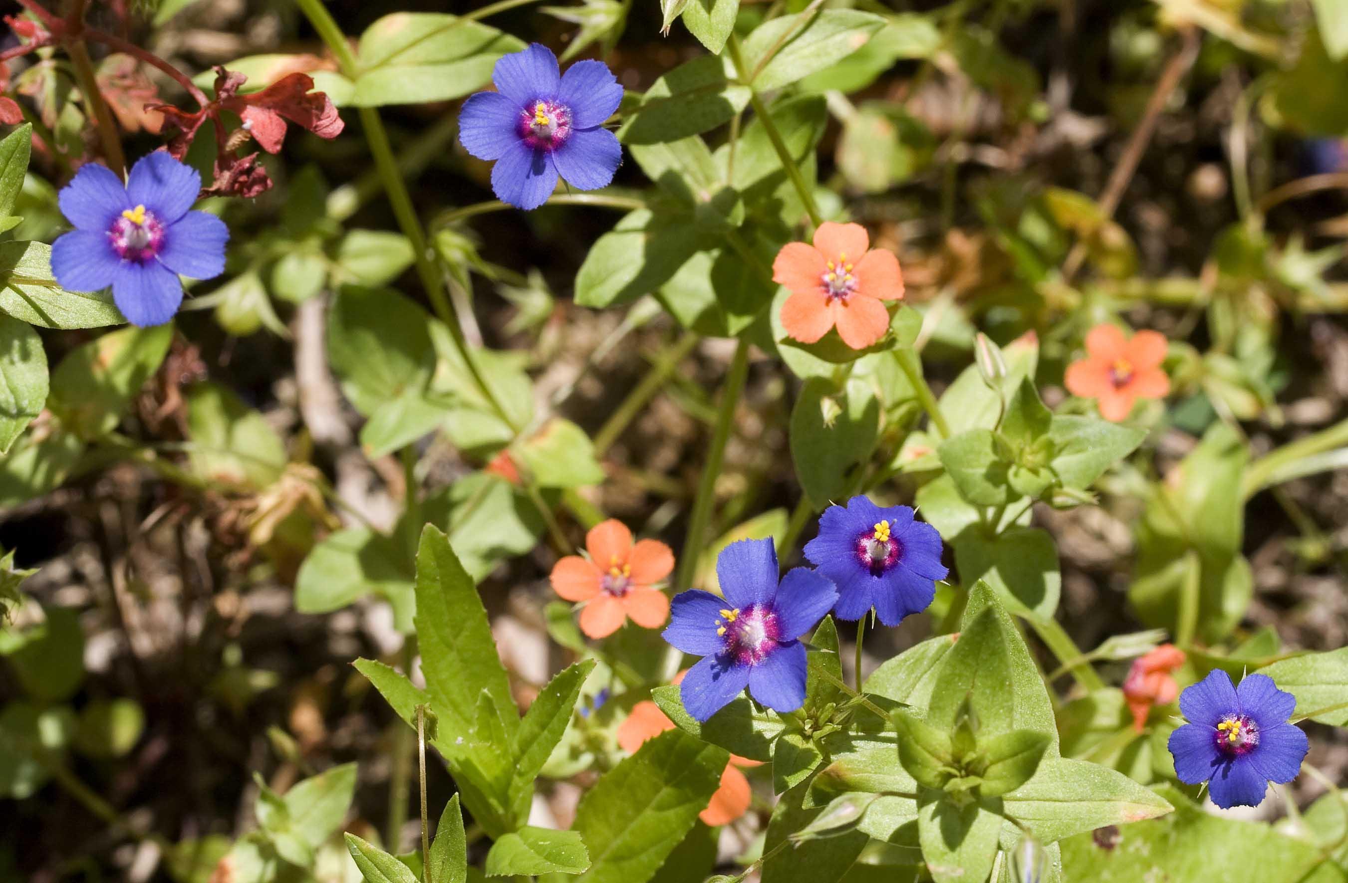A selection of spring wild flowers nw corfu mightylinksfo